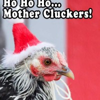 Mother cluckers meme